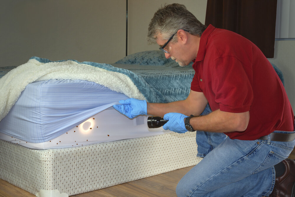 Are Bed Bugs Harmful? Some Ways To Get Rid Of It